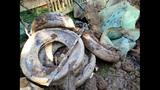 Waste found in yard_4508352