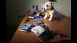 Safety harness crash test_4572976