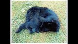 Bear cub killed by officer_5154670