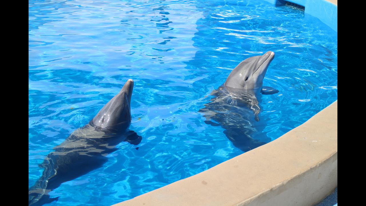 Glenn Burns travels to dolphin research center   WSB-TV