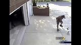 The dog's owner says his surveillance video caught the incident on camera_5412471