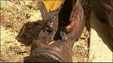 Boot_5415451