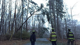 Tree down on power lines in Cherokee County_6799376