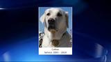 Crime-fighting arson dog dead at 15_6826948