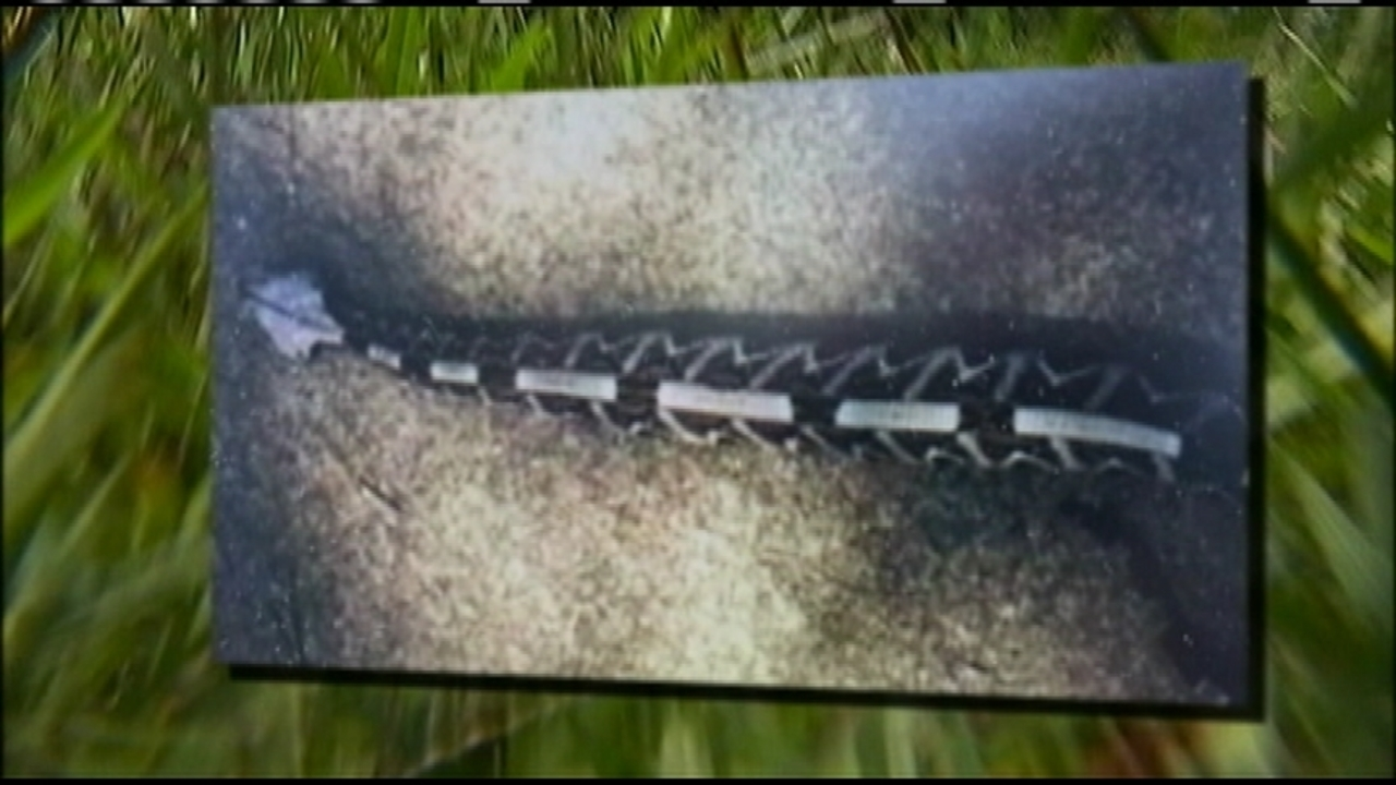 Rangers searching for 'extremely venomous' snake in Georgia