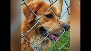 Georgia Pet Foundation works to combat overpopulation