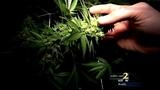 House Speaker says he's open to idea of legalizing medical marijuana