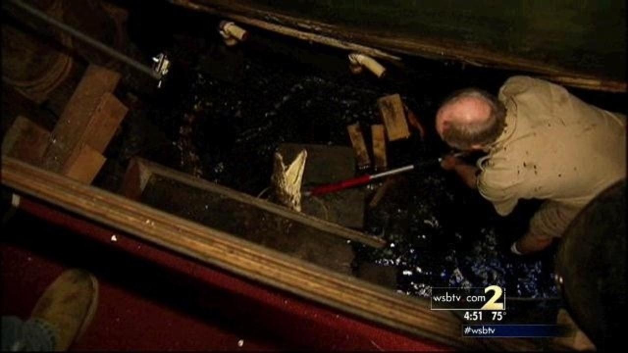 Crews wrangle Dante's Down the Hatch's 7-foot crocodile | WSB-TV