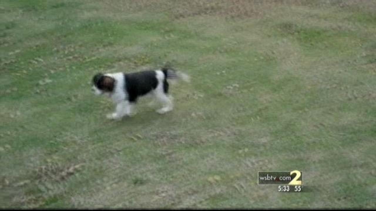 DeKalb man blames Chinese pet treats for dog's death
