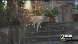 Video of man scaring dog with fireworks leads to animal cruelty charges