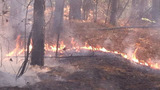 Crews battling 10-acre forest fire in Cherokee County