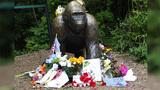 Flowers lay around a bronze statue outside the Cincinnati Zoo's Gorilla World exhibit days after a 3-year-old boy fell into the moat and officials were forced to kill Harambe, a 17-year-old Western lowland silverback gorilla, on June 2, 2016.