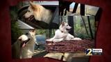 Dog owners blame flea medicine for pets' deaths