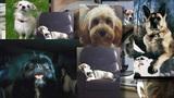 Dog owners blame popular flea medicine for pets' deaths