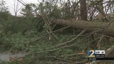 Large tree blocks road after storms