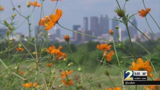 Record high pollen explosion has many seeking remedies