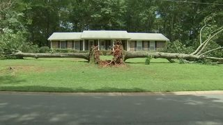 Massive trees fall, narrowly missing home