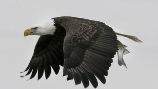 2 charged after dead bald eagle found in Georgia home