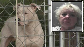 Grandmother charged after toddler killed by dogs