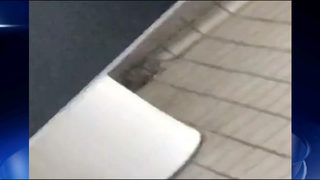 Students say mice are roaming their school