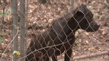 Police rescued more than 100 dogs who were locked in cages and chained to trees in the woods in Polk County.