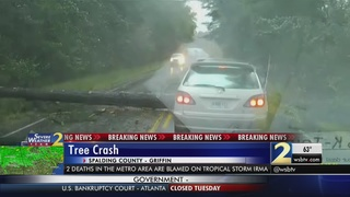 VIDEO: Large tree nearly lands on moving car
