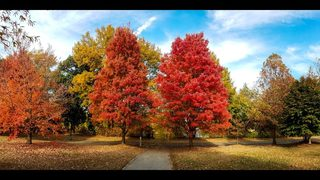 Watch the leaves change colors at Piedmont Park