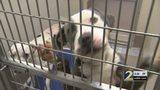 Local animal shelters to stop labeling dogs by breed