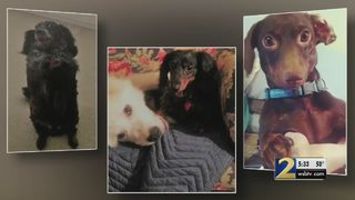 Family claims boarding facility gave their dogs away without warning