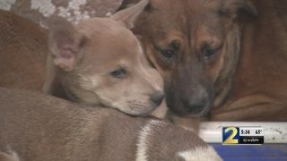 Firefighters rescue 80+ dogs from burning home