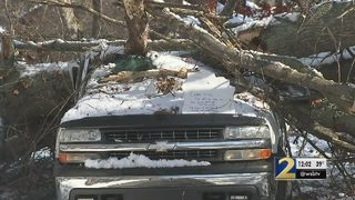 Tree crashes onto truck during storm cleanup