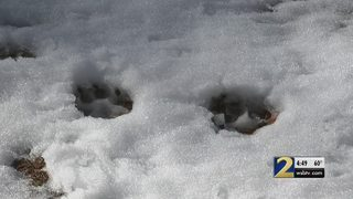 Douglasville neighbors spot bear during snow storm