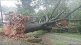 Hurricane Irma knocks down trees in September