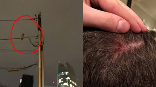 Man says he was attacked by owl in Midtown