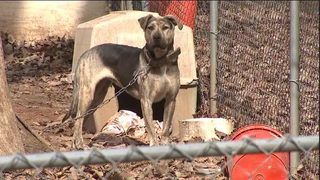 Local Animal Control officers could fine owners for leaving pets in cold