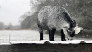 PHOTOS: Treacherous ice, snow covers metro Atlanta