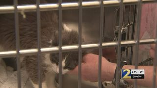 79 cats seized after 3 hoarding cases in 3 days