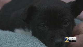 Abandoned puppy rescued from dumpster