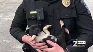 Puppy recovering after it was rescued from a dumpster