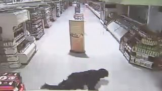 CAUGHT ON CAMERA: Burglars cut hole in Publix wall to steal drugs, police say