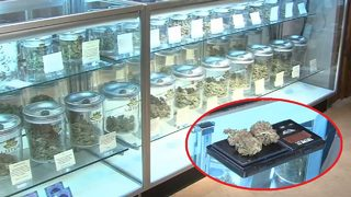 UGA study: Medical marijuana could lead to less opioid abuse