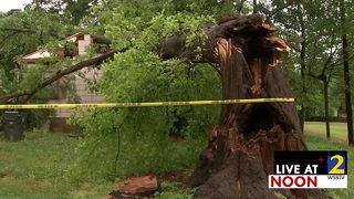 Man, dog unharmed when tree crashes into home