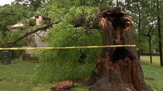 Man, dog unharmed when tree crashes into home