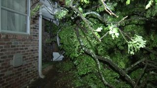 Tree topples onto house, trapping family inside