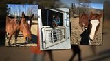 These three horses ended up on a kill pen Facebook page after the were given to Fallon Blackwood, their owner says.