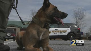 Dogs in danger: Police working to protect K9s put at risk by deadly drugs