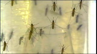 Experts warn of potentially higher West Nile virus cases this year