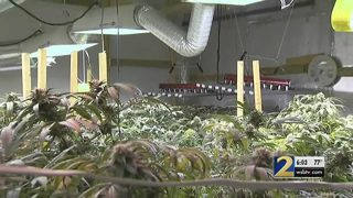 Police bust warehouse of weed in DeKalb County