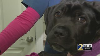 Puppy on the mend after surviving shotgun blast
