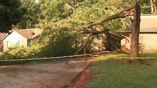 60-foot tree crashes onto family